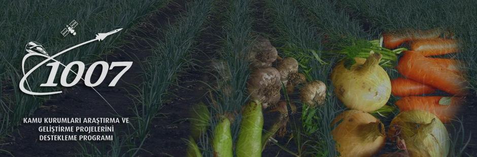 KAMAG 1007 Programı Kapsamında Yeni Çağrı: Kışlık Sebze Yetiştiriciliğinde Hat ve/veya Çeşit Geliştirme! Son Başvuru Tarihi: 24 Şubat 2017