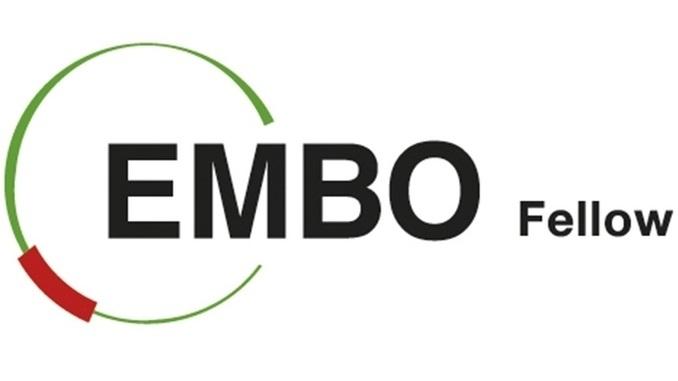 EMBO Araştırma Destek Birimleri Kısa Dönem Burs Programı!